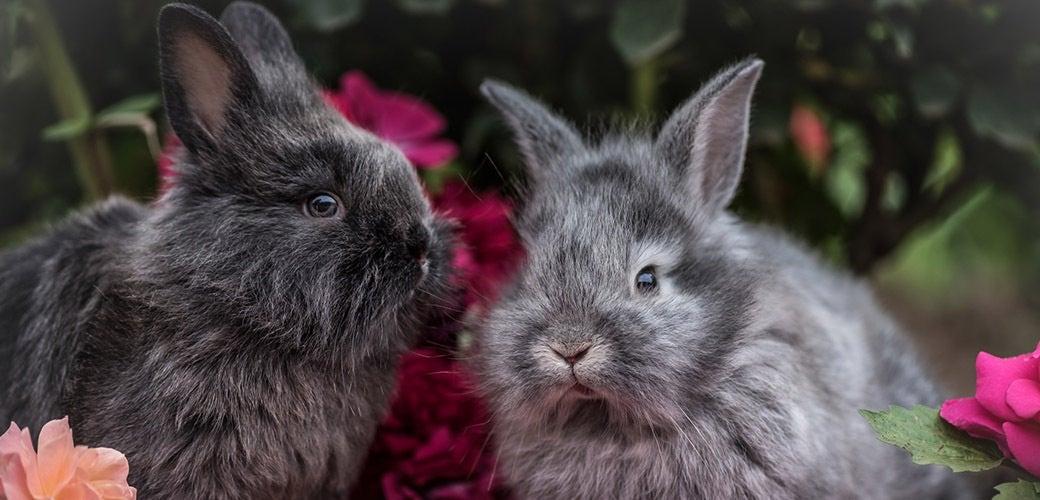 How do you make a bunny like