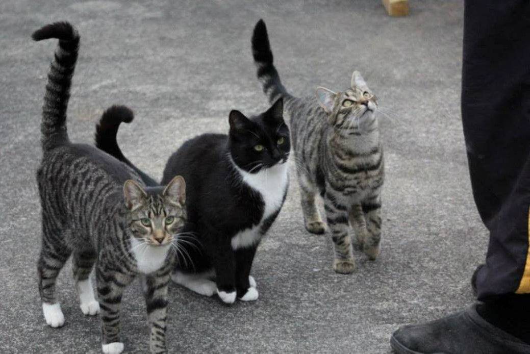 Missy, Chip & Dale
