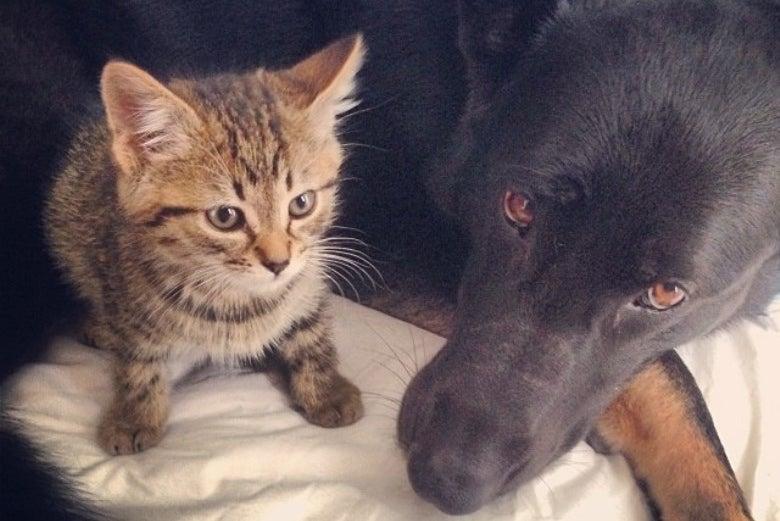 Bella & Friend